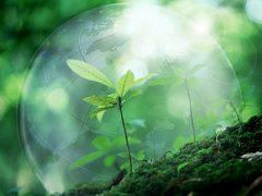 nature_1423641581_400x300_3_0