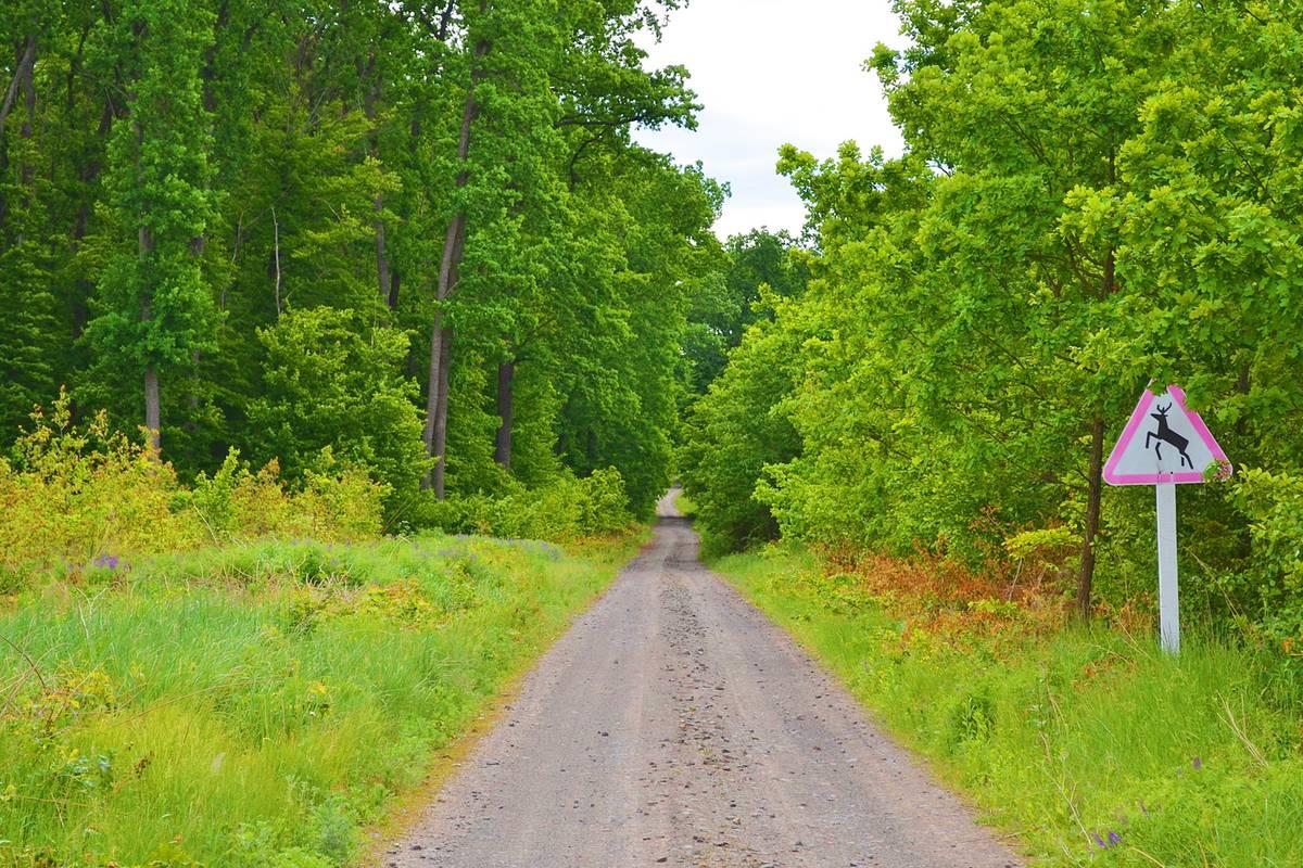 Черкащина. Лісівники відновлюють дороги