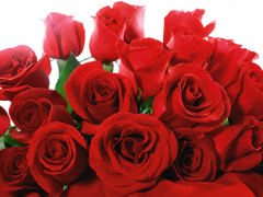 Roses-Home-1