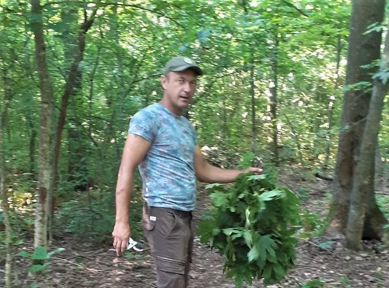 Уманські лісівники заготовляють корми для зимівлі диких тварин – Черкаське  обласне управління лісового та мисливського господарства